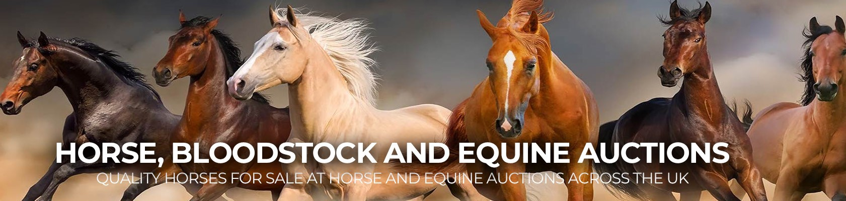 horse and equine auctions